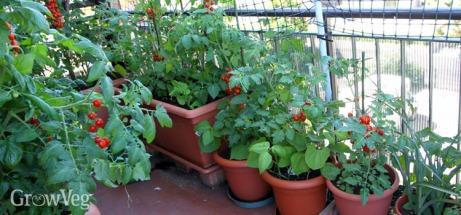 balcony-container-garden-2x.jpg