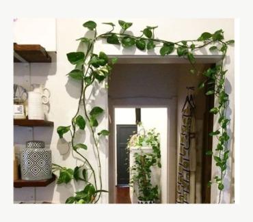 door frame plant