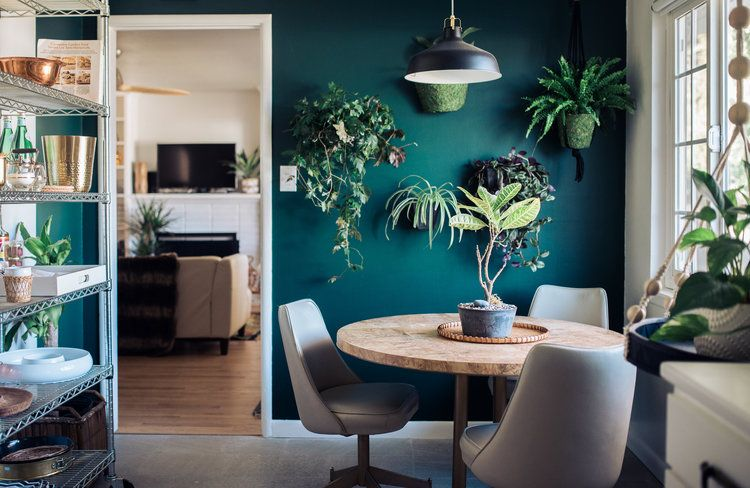 awesome green accent wall with plants